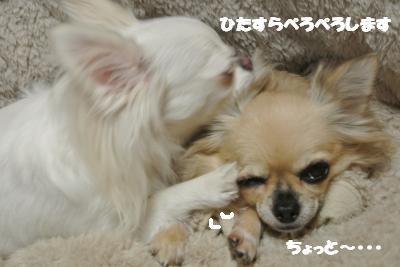 20121119+009_convert_20121121113831.jpg