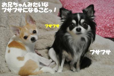 20121126+009_convert_20121127105014.jpg