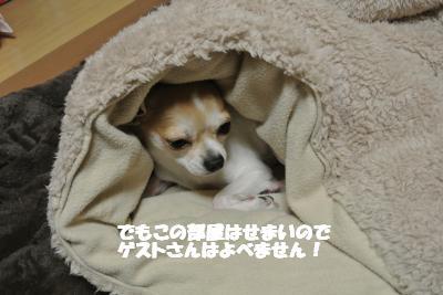20121126+011_convert_20121126102954.jpg