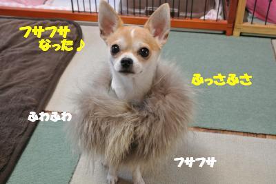 20121126+013_convert_20121127130723.jpg