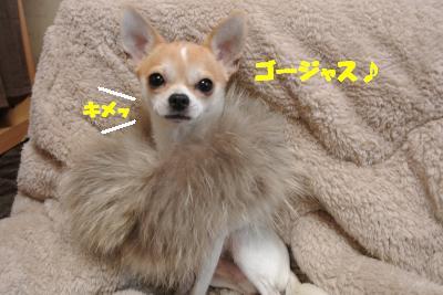 20121126+015_convert_20121127130959.jpg