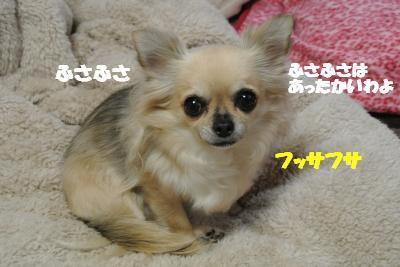 20121126+016_convert_20121127105224.jpg