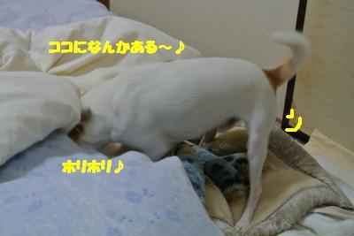 20121203+004_convert_20121206094859.jpg