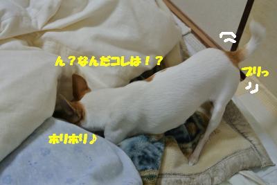 20121203+007_convert_20121206094818.jpg