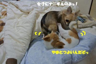 20121203+013_convert_20121204104121.jpg