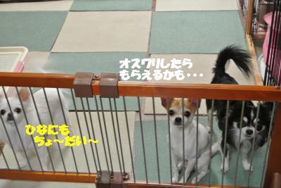 20121206+004_convert_20121206093936.jpg