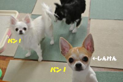 20121206+007_convert_20121206094143.jpg