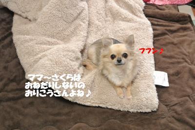 20121206+008_convert_20121206094354.jpg