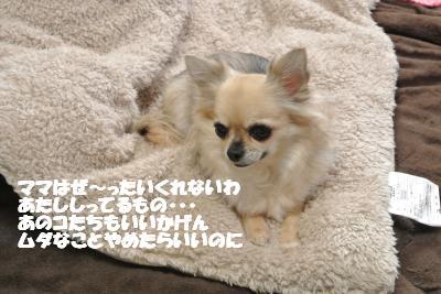20121206+009_convert_20121206094326.jpg