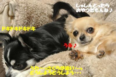 20121210+033_convert_20121210105358.jpg