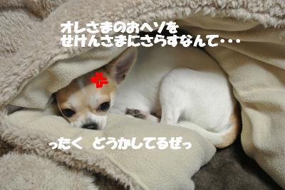 20121212+006_convert_20121212110118.jpg