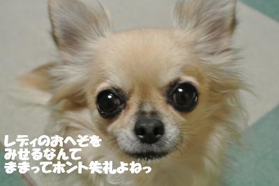 20121212+012_convert_20121212110208.jpg