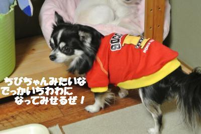 20121214+010_convert_20121214104947.jpg