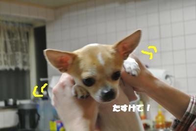 20121218+010_convert_20121218133459.jpg