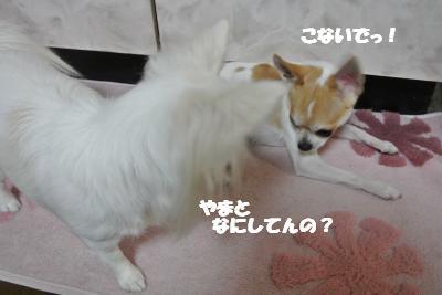 20121219+006_convert_20121219100631.jpg