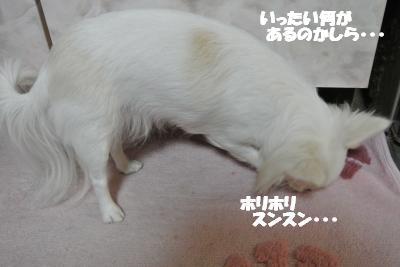 20121219+009_convert_20121219100928.jpg