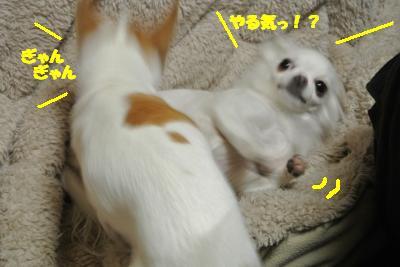 20121220+021_convert_20121220105153.jpg