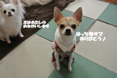 20121220+025_convert_20121220104729.jpg