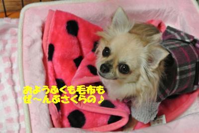 20121225+023_convert_20121225102933.jpg