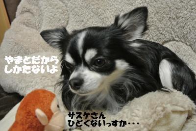 20121227+029_convert_20121227094217.jpg