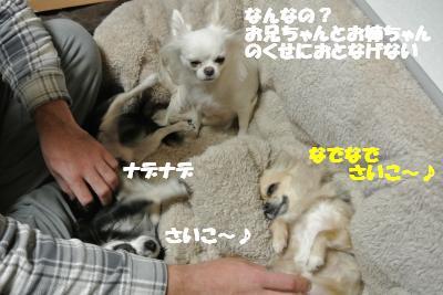 20130107+026_convert_20130107105245.jpg