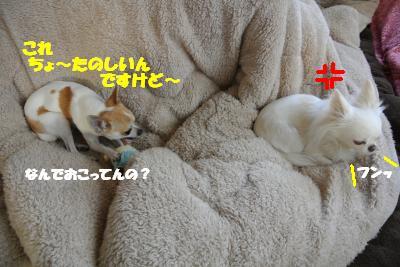 20130213+004_convert_20130213140853.jpg
