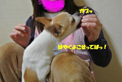20130304+006_convert_20130304110340.jpg