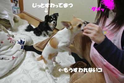 20130304+028_convert_20130304110142.jpg