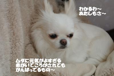 20130401+006_convert_20130401103248.jpg