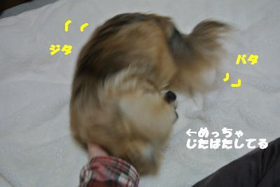 20130412+011_convert_20130412095719.jpg