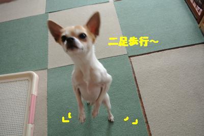 20130415+037_convert_20130415111121.jpg