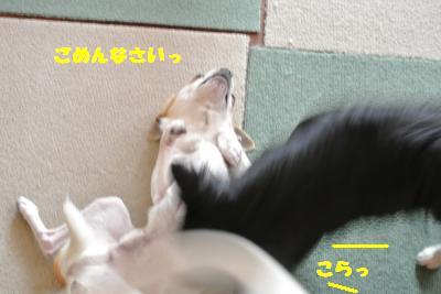 20130416+013_convert_20130416103856.jpg