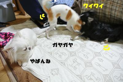 20130422+039_convert_20130422134513.jpg