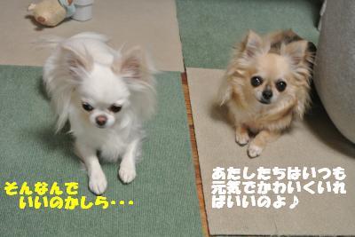 20130513+001_convert_20130513110325.jpg