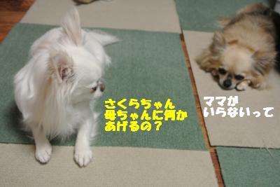 20130513+008_convert_20130513110240.jpg