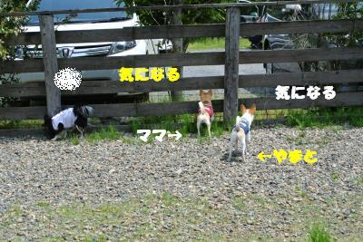 20130515+022_convert_20130520161738.jpg