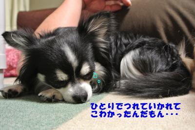 20130528+012_convert_20130528113503.jpg