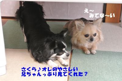 20130529+005_convert_20130529103920.jpg