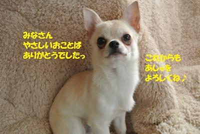 DSC_2664_convert_20140128111940.jpg