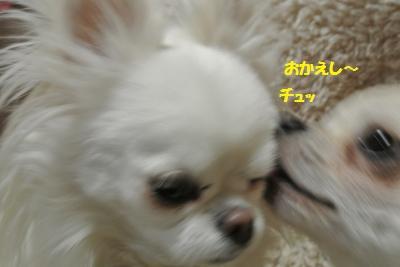 DSC_2803_convert_20140206094603.jpg