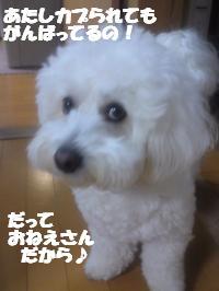 SN3U01150002_convert_20130401103101.jpg