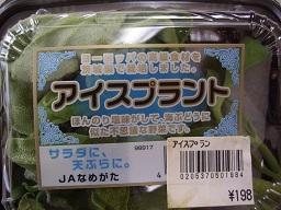 iceplant.jpg