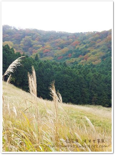 すすき草原 景色