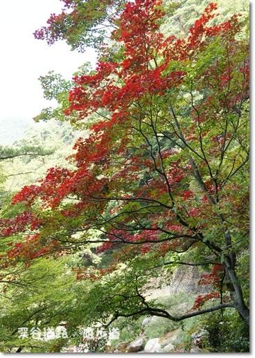紅葉も見られるよ