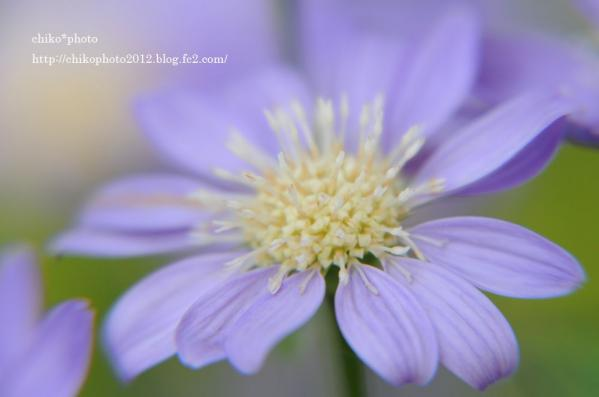 photo-お散歩写真Flowers 美味しい?_2