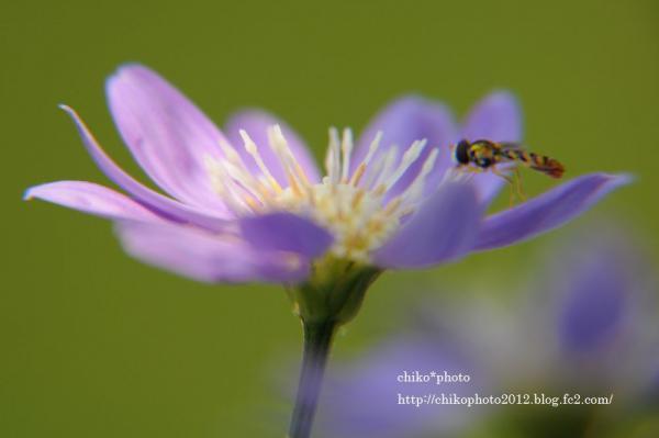 photo-お散歩写真Flowers 美味しい?_1