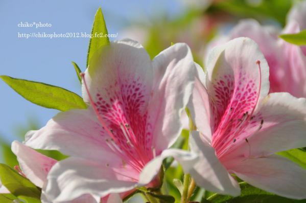 photo-お散歩写真Flowers ピンクの花1_2