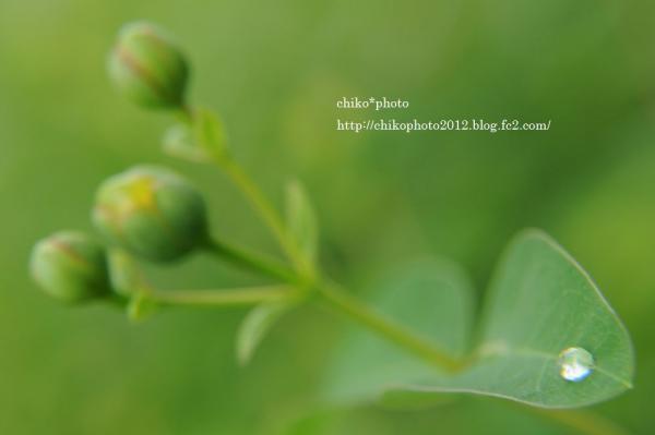 photo- 雨上がりの葉っぱ2
