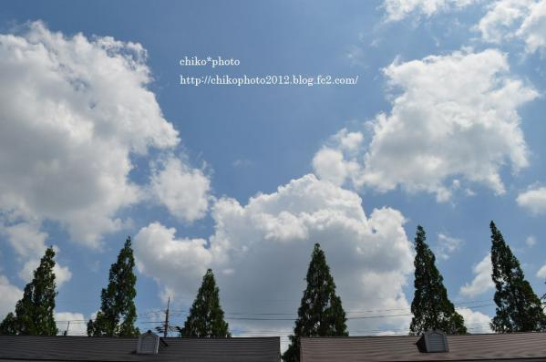photo-166 梅雨の晴れ間