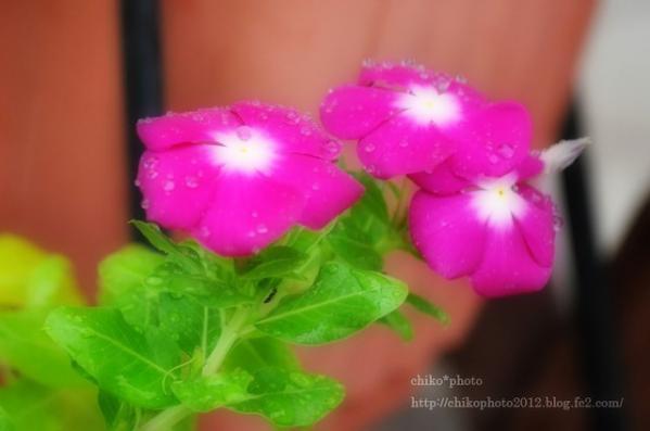 photo-168 お散歩写真Flowers ピンクのお花2_1